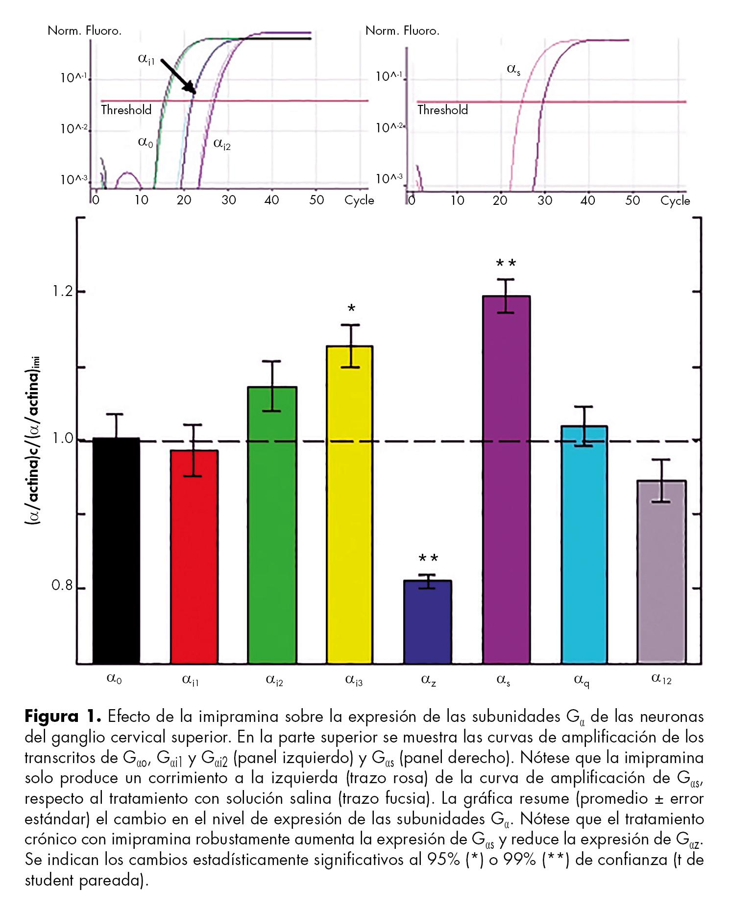 Efecto de la imipramina sobre la expresión de las subunidades Ga de las neuronas del ganglio cervical superior.